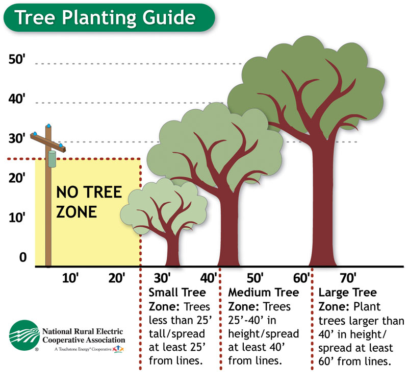 Tree planting clearance guide